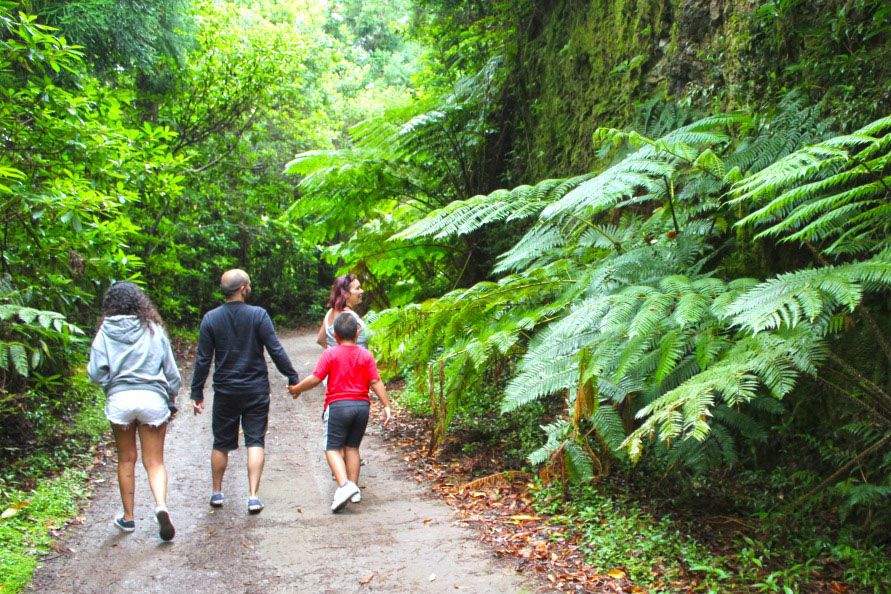 Jeep Tour Levada Walk